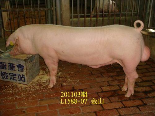 中央畜產會201103期L1588-07拍賣照片