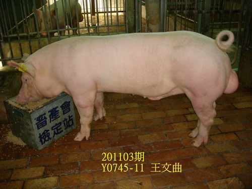 中央畜產會201103期Y0745-11拍賣照片