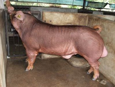 台灣動物科技研究所竹南檢定站10002期D1944-01拍賣相片