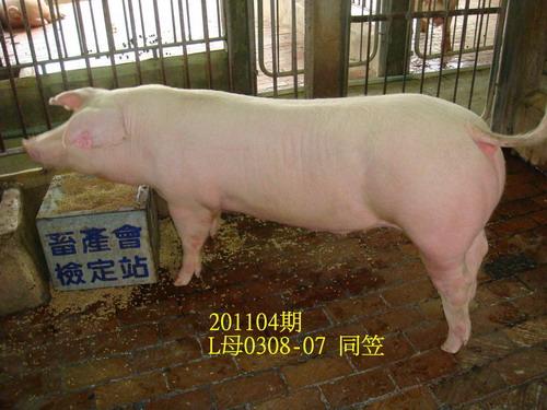 中央畜產會201104期L0308-07拍賣照片