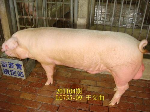 中央畜產會201104期L0755-09拍賣照片