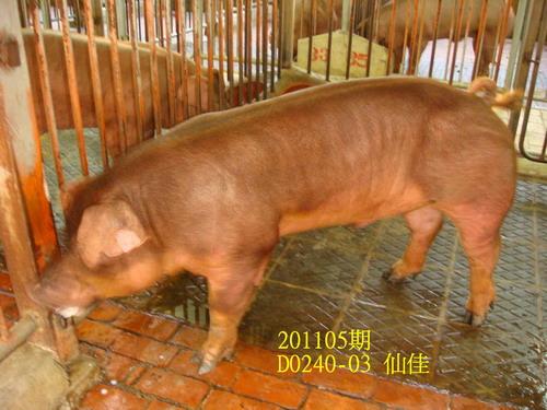 中央畜產會201105期D0240-03拍賣照片