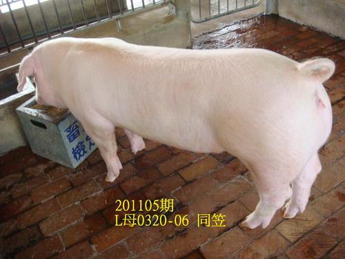 中央畜產會201105期L0320-06拍賣照片