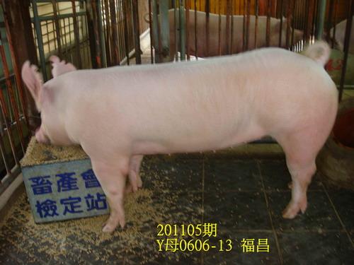 中央畜產會201105期Y0606-13拍賣照片