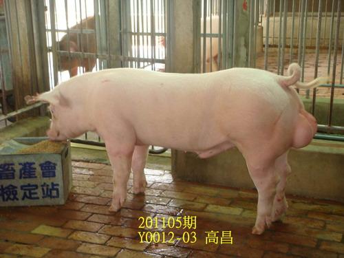 中央畜產會201105期Y0012-03拍賣照片