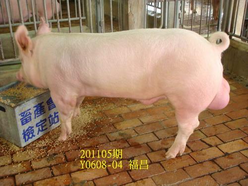 中央畜產會201105期Y0608-04拍賣照片