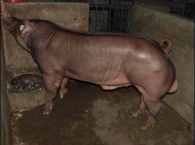 台灣動物科技研究所竹南檢定站10004期D0179-07拍賣相片