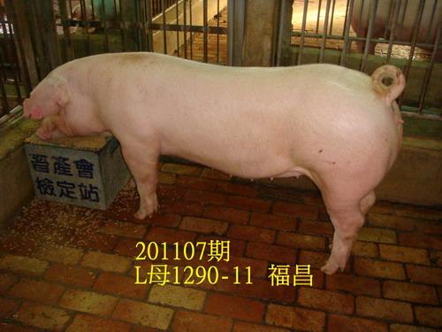 中央畜產會201107期L1290-11拍賣照片