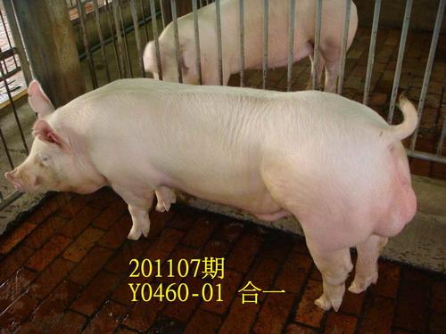 中央畜產會201107期Y0460-01拍賣照片