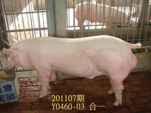 中央畜產會201107期Y0460-03拍賣照片