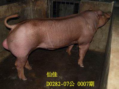 台灣動物科技研究所竹南檢定站10007期D0282-07拍賣相片