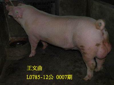 台灣動物科技研究所竹南檢定站10007期L0785-12拍賣相片