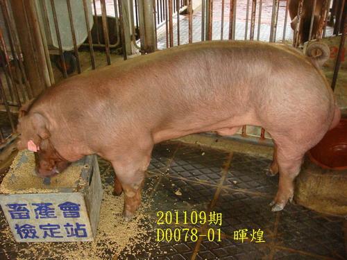 中央畜產會201109期D0078-01拍賣照片