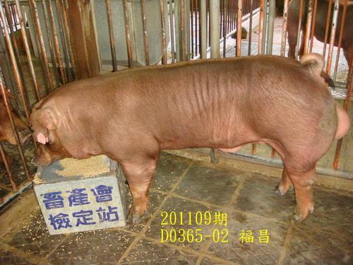 中央畜產會201109期D0365-02拍賣照片