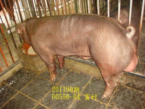 中央畜產會201109期D0556-04拍賣照片