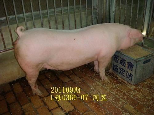 中央畜產會201109期L0360-07拍賣照片
