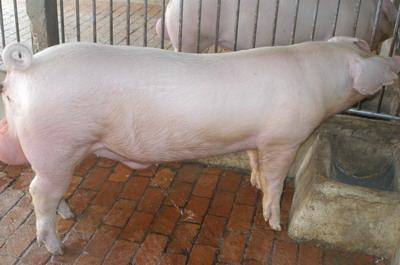 中央畜產會201109期L1324-02體型-全身相片