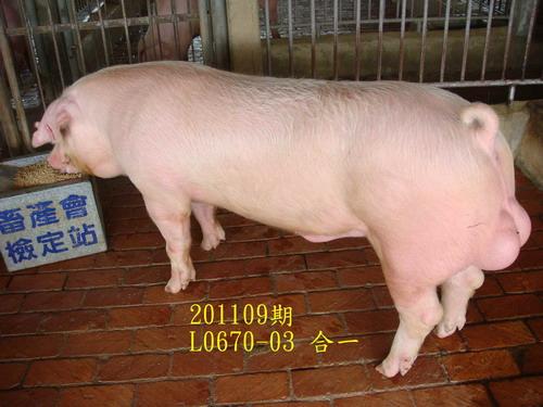 中央畜產會201109期L0670-03拍賣照片