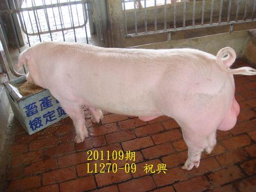 中央畜產會201109期L1270-09拍賣照片