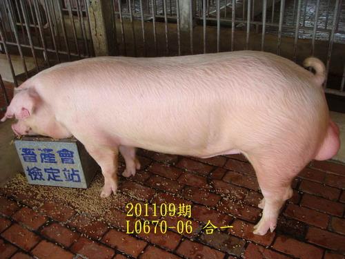 中央畜產會201109期L0670-06拍賣照片