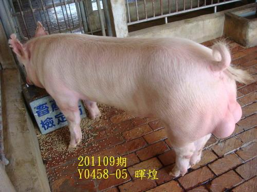 中央畜產會201109期Y0458-05拍賣照片