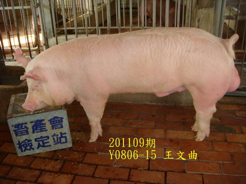 中央畜產會201109期Y0806-15拍賣照片