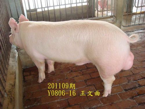 中央畜產會201109期Y0806-16拍賣照片