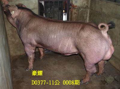 台灣動物科技研究所竹南檢定站10008期D0377-11拍賣相片