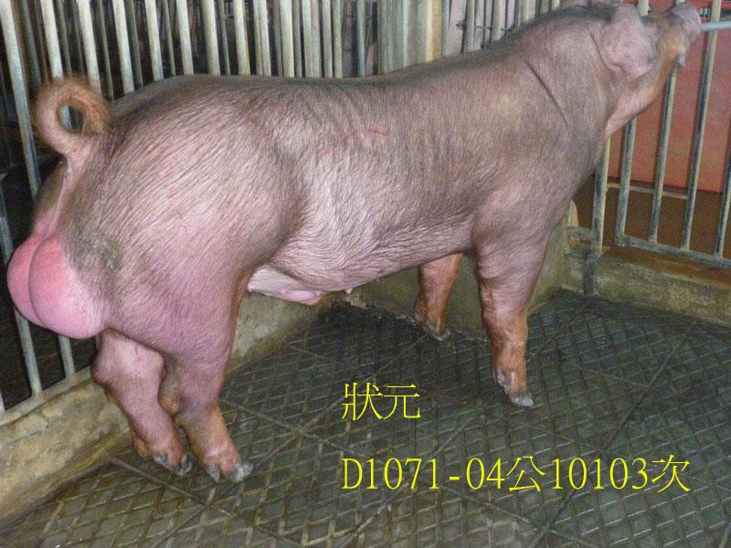 台灣區種豬產業協會10103期D1071-04側面相片