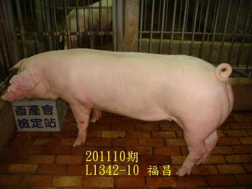 中央畜產會201110期L1342-10拍賣照片