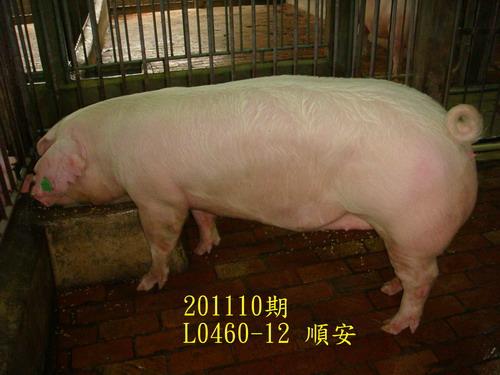 中央畜產會201110期L0460-12拍賣照片
