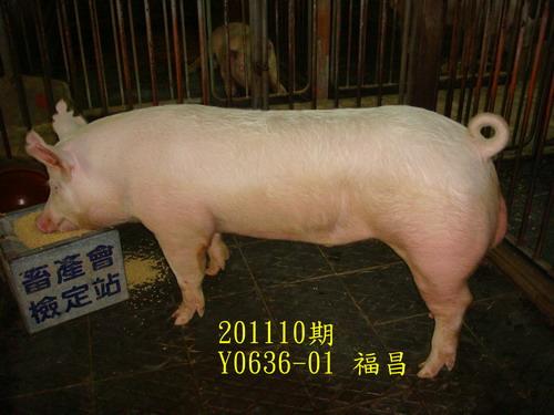 中央畜產會201110期Y0636-01拍賣照片