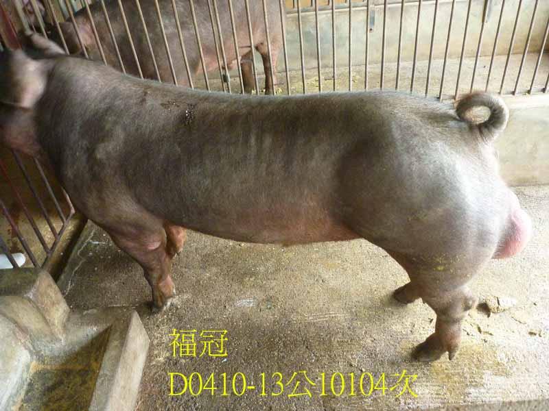 台灣區種豬產業協會10104期D0410-13側面相片