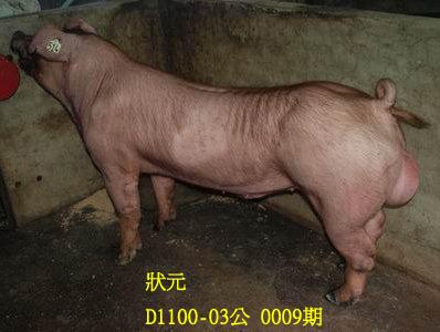 台灣動物科技研究所竹南檢定站10009期D1100-03拍賣相片