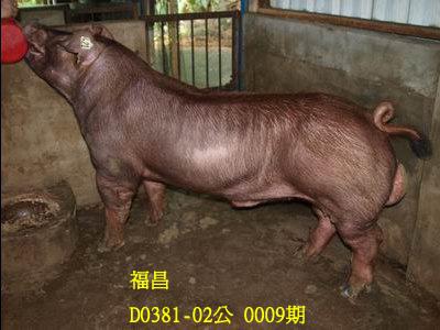 台灣動物科技研究所竹南檢定站10009期D0381-02拍賣相片