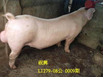 台灣動物科技研究所竹南檢定站10009期L1279-08拍賣相片
