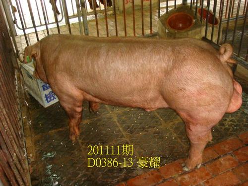 中央畜產會201111期D0386-13拍賣照片