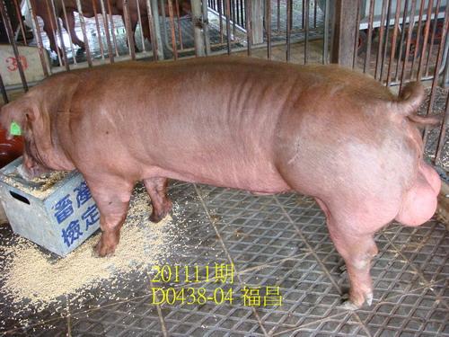 中央畜產會201111期D0438-04拍賣照片