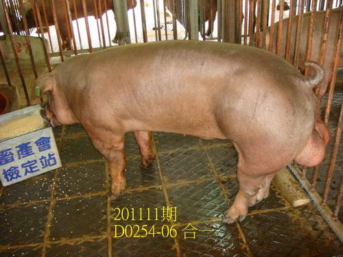 中央畜產會201111期D0254-06拍賣照片