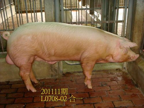 中央畜產會201111期L0708-02拍賣照片