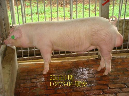中央畜產會201111期L0473-04拍賣照片
