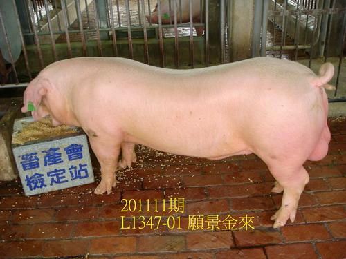 中央畜產會201111期L1347-01拍賣照片