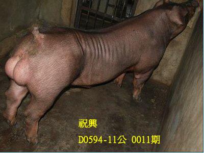 台灣動物科技研究所竹南檢定站10011期D0594-11拍賣相片