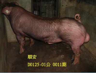 台灣動物科技研究所竹南檢定站10011期D0125-01拍賣相片