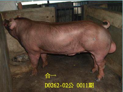 台灣動物科技研究所竹南檢定站10011期D0262-02拍賣相片