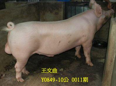 台灣動物科技研究所竹南檢定站10011期Y0849-10拍賣相片