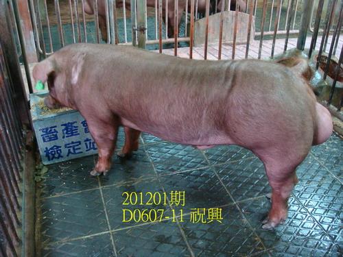 �����b���|201201��D0607-11���Ӥ�