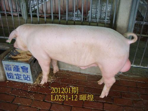 中央畜產會201201期L0231-12拍賣照片