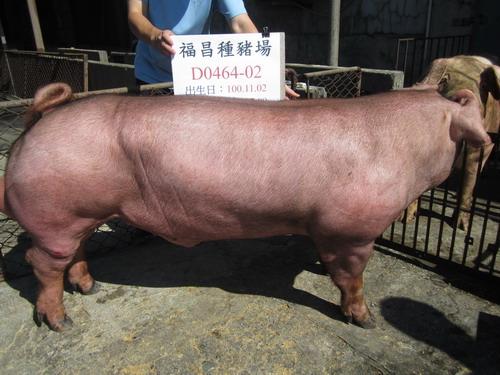 台灣區種豬產業協會10106期D0464-02側面相片