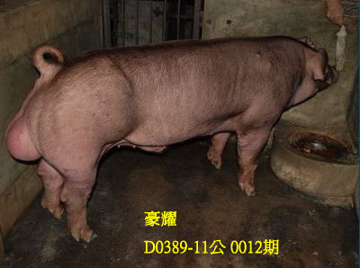 台灣動物科技研究所竹南檢定站10012期D0378-11拍賣相片